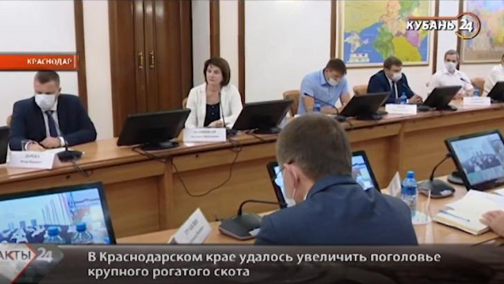 Людмила Маницкая приняла участие в совещании у губернатора Краснодарского края