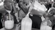 Всемирный день молока. О пользе молока и молочных продуктов