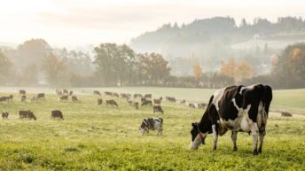 Тандем аграрного вуза и учхоза отмечен высокой наградой