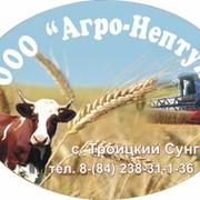 Агро-Нептун вступил в Молочный союз России